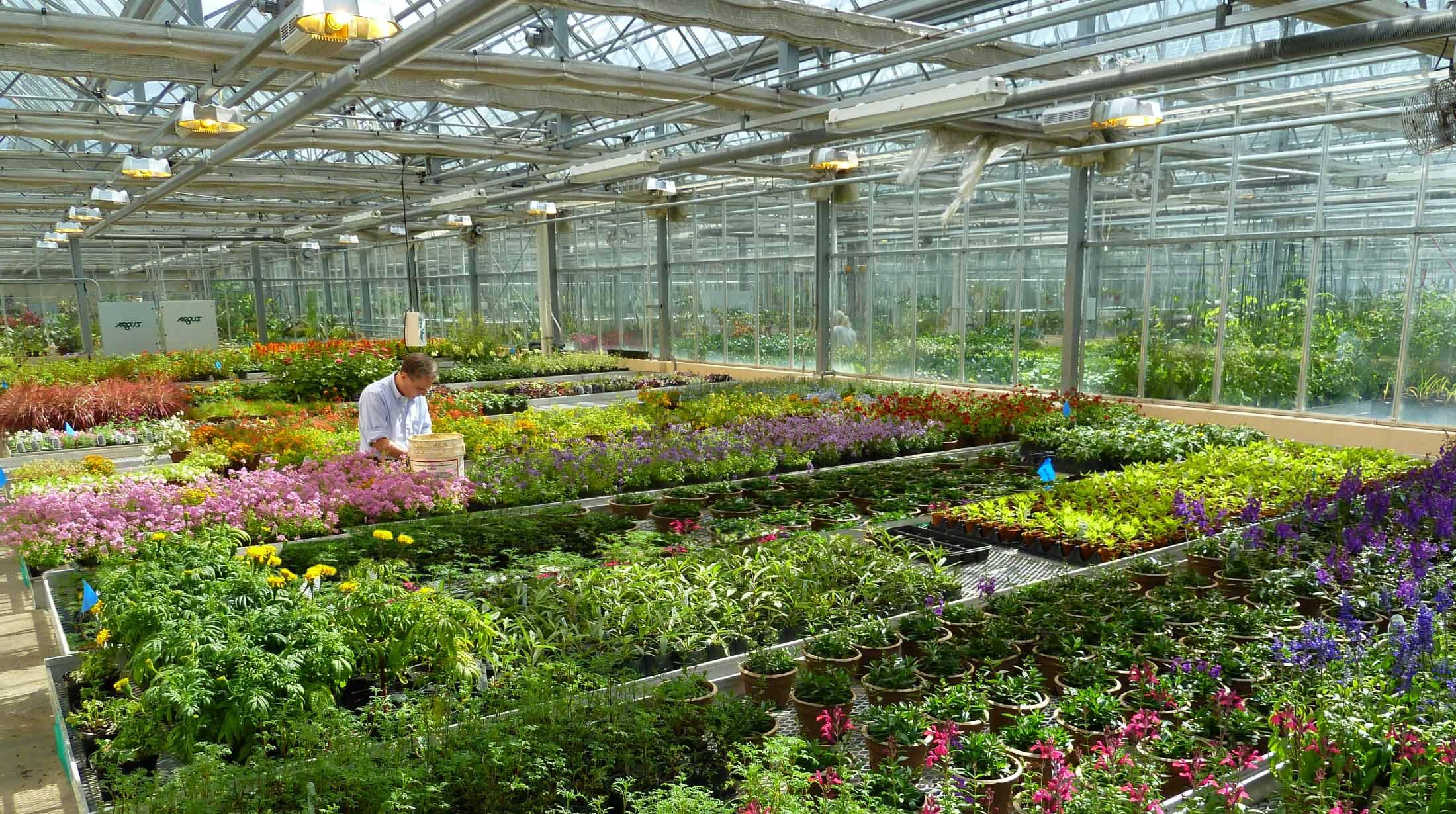 Где купить цветы из теплиц